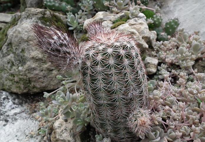 Kaktusy w ogrodzie