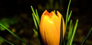 Okrywanie roslin na zime