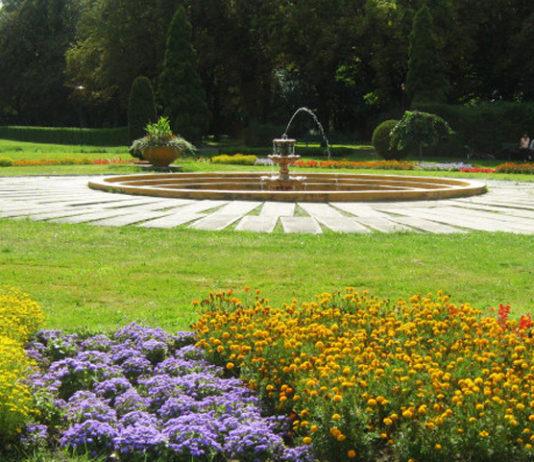 Letnie kwiaty ogrodowe