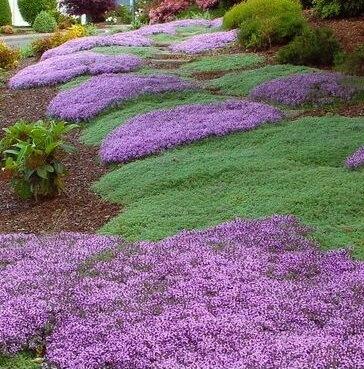 Niebieskie kwiaty ogrodowe byliny