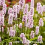byliny ogrodowe