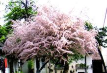Drzewa i krzewy ozdobne