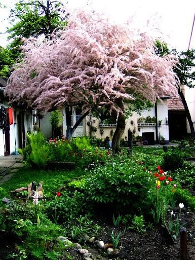 Drzewa I Krzewy Ozdobne Gatunki Godne Polecenia