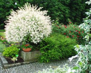 ogród dla zapracowanych