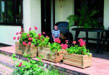 Uprawa pelargonii w donicach