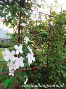 trejaże i bramki ogrodowe