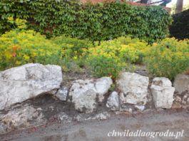 wokół ścian domu – jeśli parter domu jest wyniesiony ponad grunt działki, warto usypać skarpę i obsadzić ją roślinami. Jeżeli spad będzie miał więcej niż 30o , należy zbudować murek oporowy;
