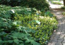 Projektowanie ścieżek w ogrodzie